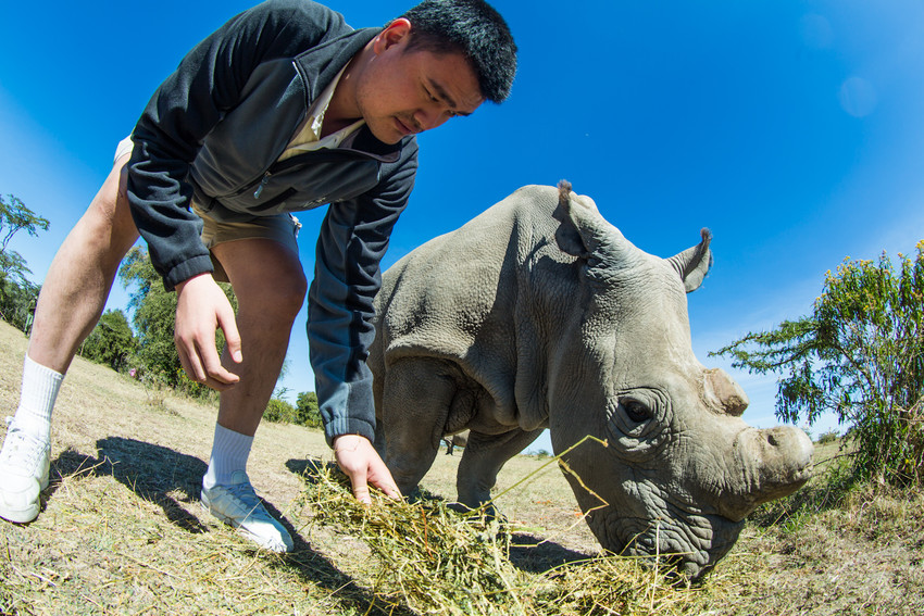 Photo of Yao Ming with a Northern White Rhino © Kristian Schmidt/WildAid