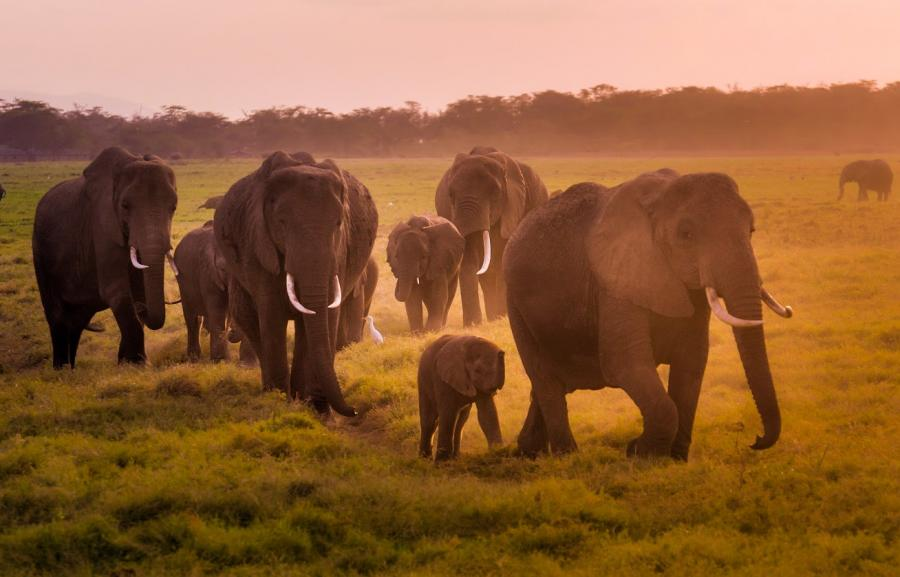 A walk in the setting sun, photo by Poulomee Basu